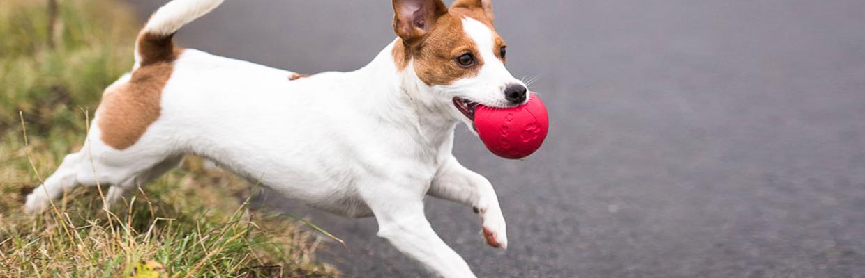 Petsafe ball launcher review